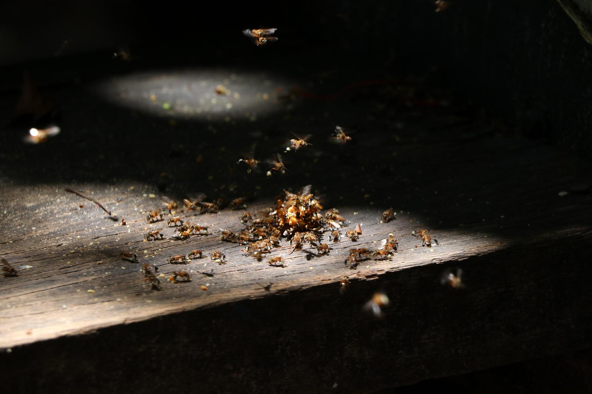 6 Common Household Pests and How to Get Rid of Them